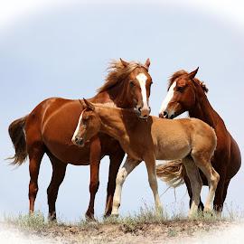 by Barbara Lokken - Animals Horses