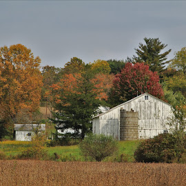 Rural Scene by Robin Smith - Buildings & Architecture Other Exteriors ( fall, trees, barns, architecture, landscape )