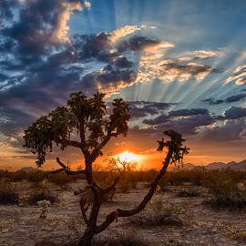 Desert sunset by Karen Raahauge - Landscapes Sunsets & Sunrises