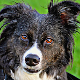 by Linda Woodworth Sulla - Animals - Dogs Portraits