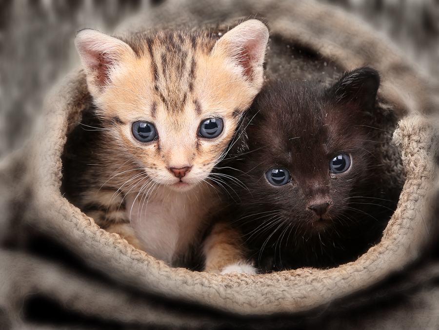 by Prachit Punyapor - Animals - Cats Kittens ( cutest cats )