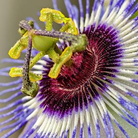 by Veli Toluay - Flowers Single Flower ( bahar, bitki, aydınlık, doğal, çarkıfelek, naturel, güzel, tabii, çiçek, renkli, yaz,  )