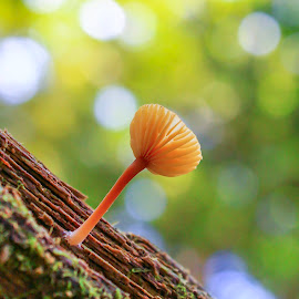 Tiny Mushroom by Jeff McVoy - Nature Up Close Mushrooms & Fungi ( mushroom, wood, moss, tiny mushroom, glow, log )