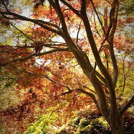 maple tree by Brenda Shoemake - Nature Up Close Trees & Bushes