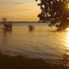 Golden Light by Kirk Barnes - Landscapes Sunsets & Sunrises ( reflection, light, sunset, golden,  )
