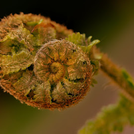 Spiral by Michaela Firešová - Nature Up Close Other plants ( fern, detail, spiral )