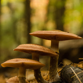 Fairy Steps by Gabrielle Libby - Nature Up Close Mushrooms & Fungi ( mushroom, macro, fungi, wood, maine, green, fungus, tan, close )