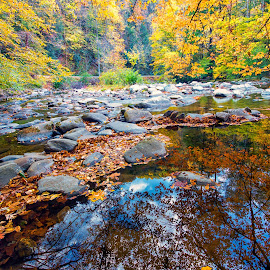 Rocks In the Water by Carol Ward - Landscapes Waterscapes ( tn, autumn leaves, great smoky mountains national park, reflections, trees, leaves, rocks, smoky mountains )