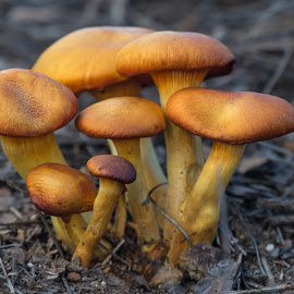 by Sergio Tohtli - Nature Up Close Mushrooms & Fungi