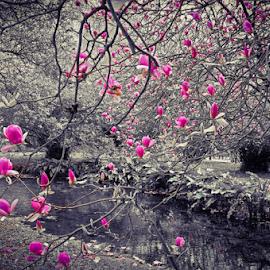 Tree Blossom in Ninfa Gardens by Travis Pambu - Digital Art Places (  )