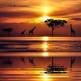 on the move by Susan Davies - Digital Art Places ( walking, lovely., sunset, reflections, silhouettes, trees, giraffes )