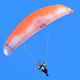 Check Me Out! by Becky Luschei - Sports & Fitness Other Sports ( picture, hear, overhead, shoot, camera, fun, parasailer )