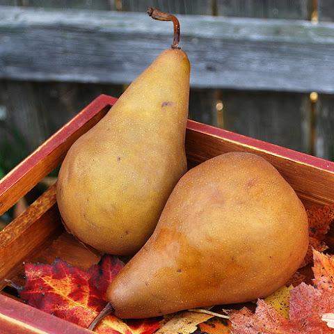 10 Best Pears Phyllo Dough Recipes | Yummly