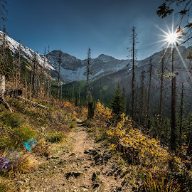 West Tatras forest by Laky Kucej - Landscapes Forests