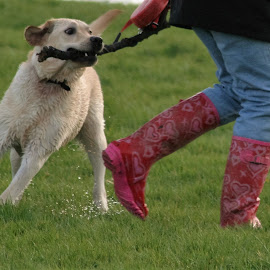wellies and walkies by Sue Rickhuss - Animals - Dogs Playing