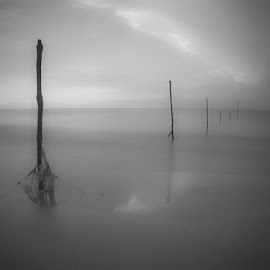 morning mist by Wayang Gambar - Landscapes Beaches ( water, shore, clouds, wood, seascape, beach, morning, misty, mist )
