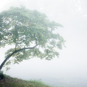 The Dreaming Tree by Greg Booher - Landscapes Weather ( tranquil, foggy, single, tree, fog, atmosphere, lonely, misty, river, mist )