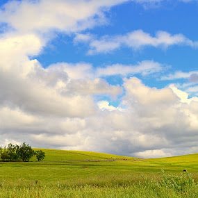 clouds rolling by Rima Biswas - Landscapes Prairies, Meadows & Fields ( clouds, ranch, blue, grass, green, california, white, valley )