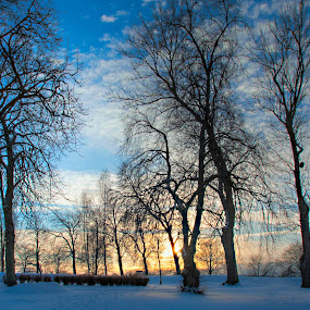 by Morten Gustavsen - Landscapes Sunsets & Sunrises ( winter, sunset, trees, norway )