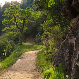 The Trail Ahead by Richard Duerksen - Landscapes Travel ( ca, covered bridge, oak, south yuba river, trail )
