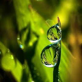 cant  stop loving you by Kawan Santoso - Nature Up Close Natural Waterdrops