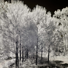 by Stavros Argyropoulos - Landscapes Forests ( ir, b&w, nature, black and white, infrared, greece, trees, forest, kaiapha lake )