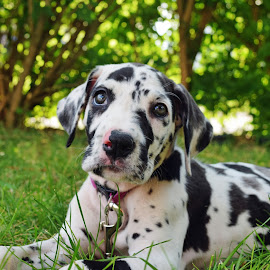 spots by Donna Paul - Animals - Dogs Puppies