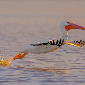 Early Morning Sun by Don Holland - Animals Birds