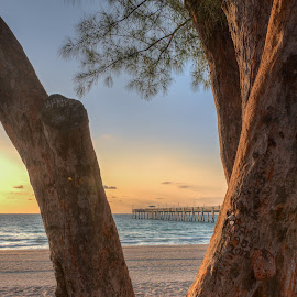 Wooden Frame-3 by Steve Morrison - Landscapes Sunsets & Sunrises ( dania beach, casaurina tree, florida, pier, sunrise )