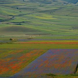 Castelluccio 10 by Bruno Brunetti - Landscapes Prairies, Meadows & Fields ( colors, flowers, italy, castelluccio, fields,  )