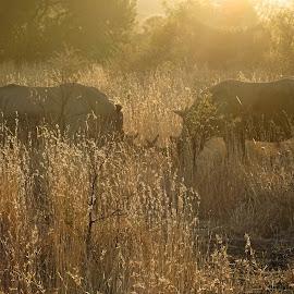 Rhino silhouette  by Diane Rogers Jones - Novices Only Wildlife
