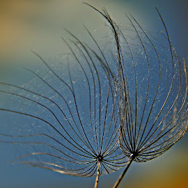 Hello Light by Marija Jilek - Nature Up Close Other plants