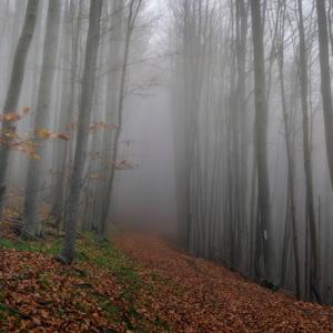 Mystery forest-4.jpg