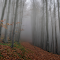 Mystery forest-4.jpg
