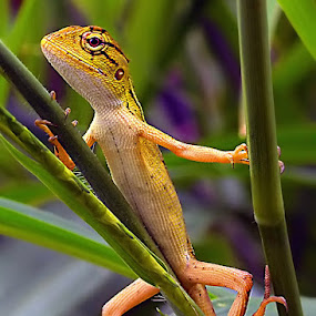 my pose by Anif Putramijaya - Animals Reptiles