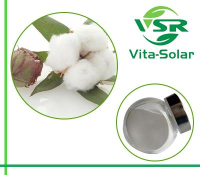 Cottonseeds Phytosterol, GMO-FREE Oil Cottonseeds 95%,90% Sterols Suppliers