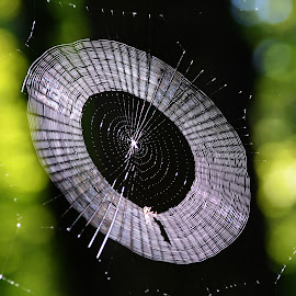 by Teresa Daines - Nature Up Close Webs