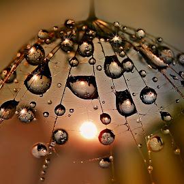 Sun In Land Of Tears by Marija Jilek - Nature Up Close Natural Waterdrops