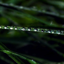 Water Kissed by Devon Andriola - Nature Up Close Leaves & Grasses ( idaho, water drops, nature, grass, photography )