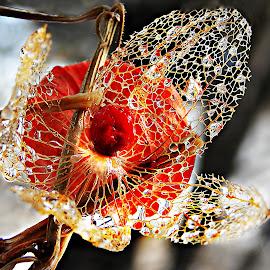 Opened Heart by Marija Jilek - Nature Up Close Other plants