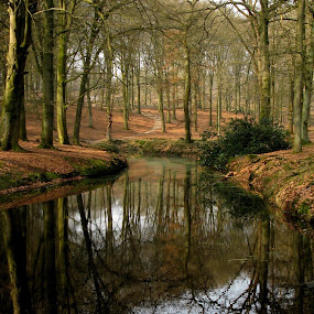 trees reflecting in the water by Hilda van der Lee - Landscapes Forests ( water, nature, refelections, bald trees, forest, spring,  )