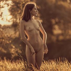 Colors of autumn by Dmitry Laudin - Nudes & Boudoir Artistic Nude ( beautiful, nature, light, sunset, autumn, nude, girl )