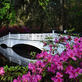 Magnolia Plantation by Sandra Maldonado - City,  Street & Park  City Parks