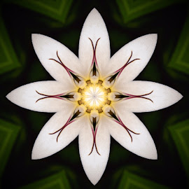 Crinum Lily Abstract by Steve Munford - Abstract Patterns ( abstract, crinum, kaleidoscopic, nature, lily, flower )