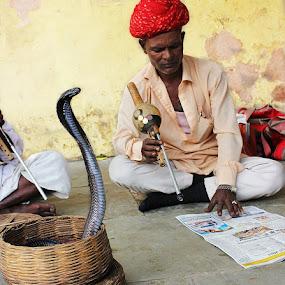 Alert by Pinaki Pradhan - People Street & Candids ( snake, rajasthan, india )