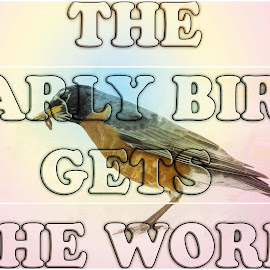 Early Bird by Sheen Deis - Typography Captioned Photos ( robins, birds )