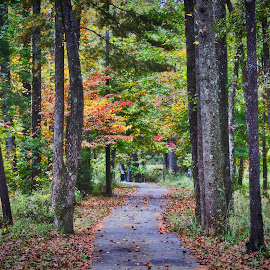 Campus Lake Path by Ty Shults - Landscapes Forests ( siuc, autumn, trail, path, trees, forest, walkway, lake, leaves, woods, campus )