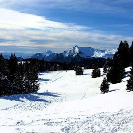 drink break by Ian Legon - Landscapes Mountains & Hills ( ski, mountain, snow, trees, deserted )