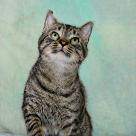 by Susan Hogan - Animals - Cats Portraits