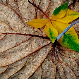 by Francois Wolfaardt - Nature Up Close Leaves & Grasses